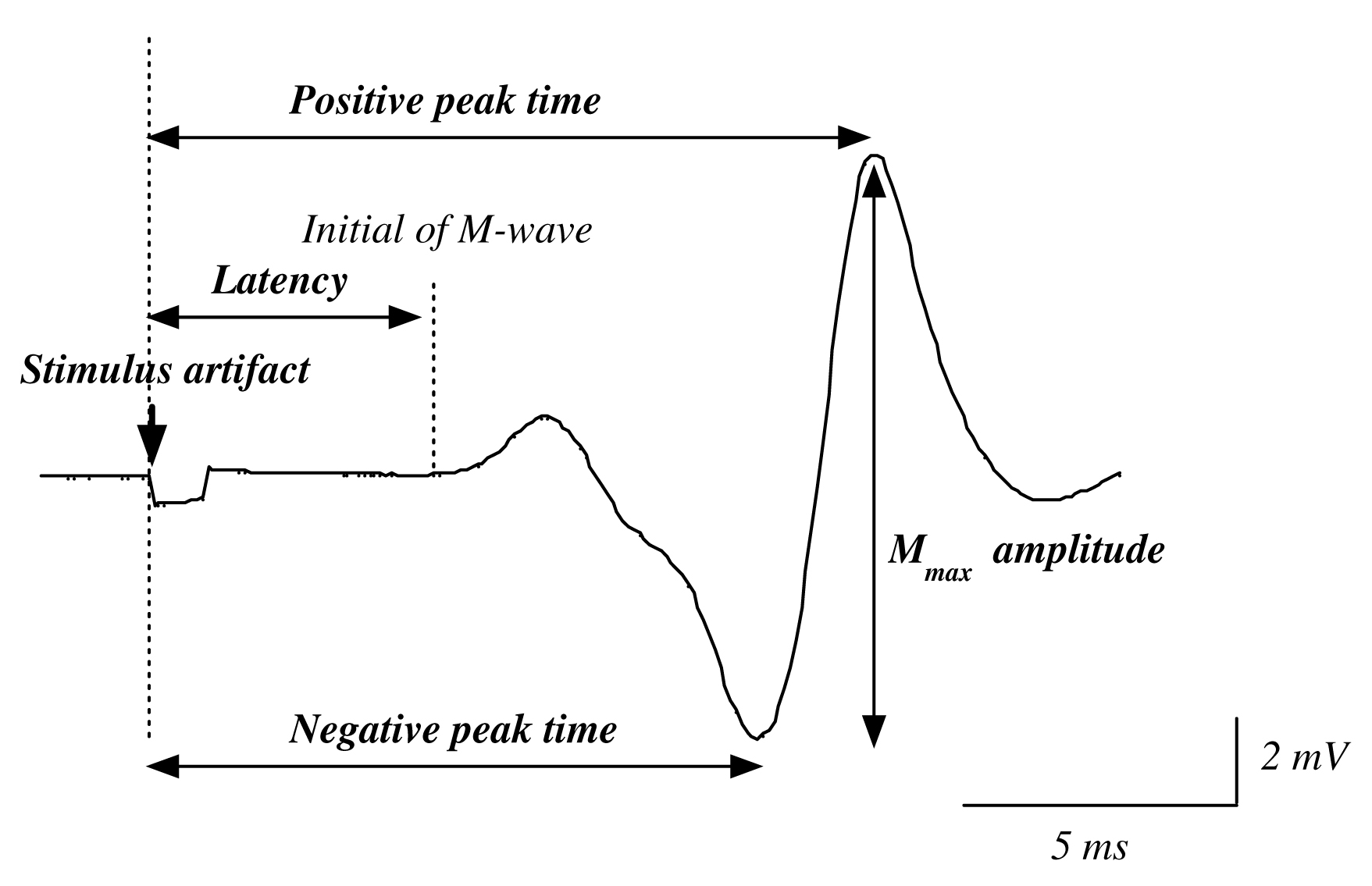 原著 | Buoyancy Induced Decrease of Maximal M-wave Amplitude